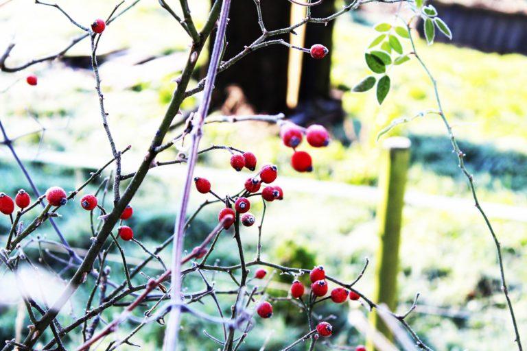 Des plantes toute l'année