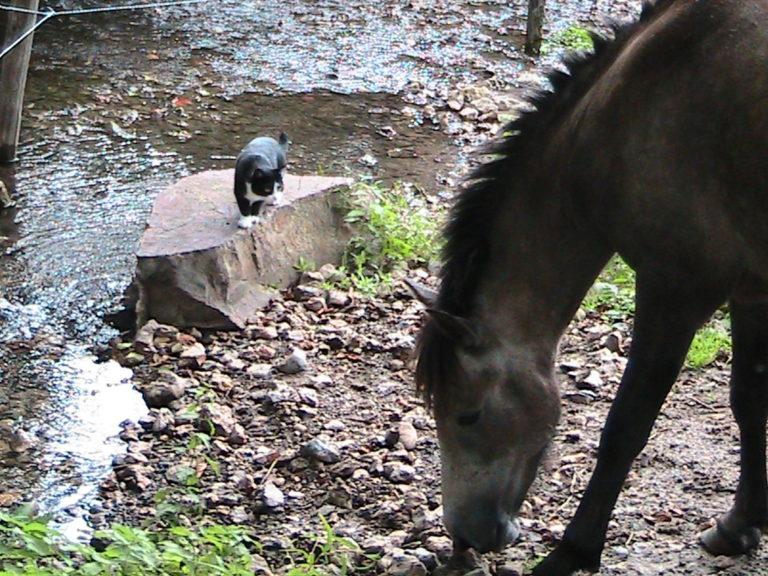 L'eau pour le cheval en été