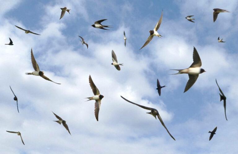 Les oiseaux du Paddock Paradise